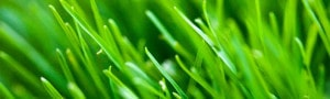 cropped-Green-Grass.jpg